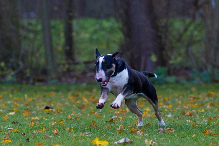 honden los (26)