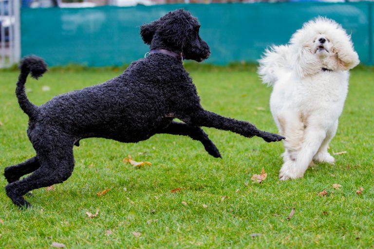 honden los (8)